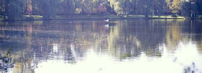 In unmittelbarer Nähe zu unser Praxis liegt der Schäfersee mit einer schönen Parkanlage, die für individuelle Trainingseinheiten oder Kurse genutzt werden kann